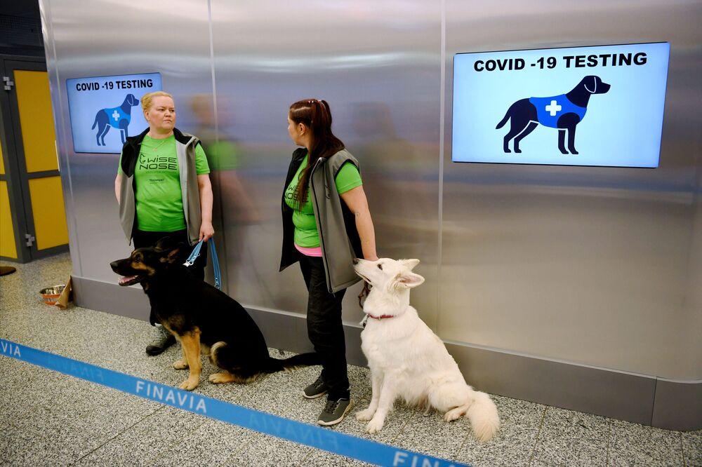 I dipendenti dell'aeroporto di di Helsinki con i cani capaci di rilevare il coronavirus nei campioni di passeggeri