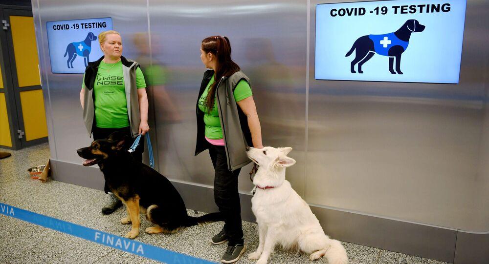 Cani anti-Covid all'aeroporto di Helsinki