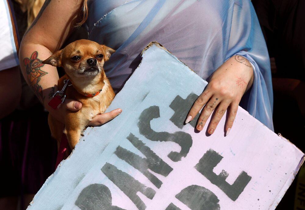 Un manifestante porta il suo cane durante la marcia London Trans Pride 2020 a Londra, Gran Bretagna
