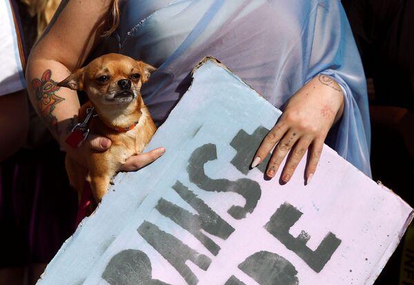 Un manifestante porta il suo cane durante la marcia London Trans Pride 2020 a Londra, Gran Bretagna - Sputnik Italia