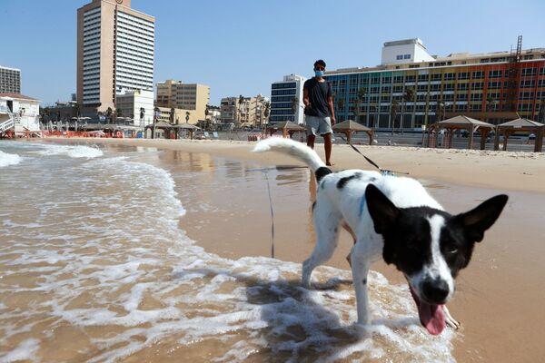 Un cittadino porta a spasso il suo cane sulla spiaggia di Tel Aviv, Israele - Sputnik Italia