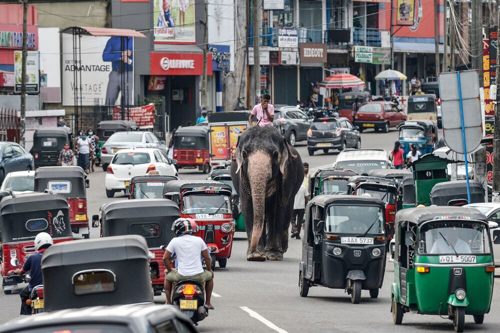 Un uomo con un elefante in mezzo al traffico a Piliyandal, Sri Lanka, il 27 settembre 2020
