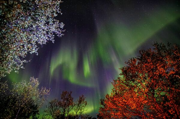 L'aurora polare nella regione di Murmansk, Russia - Sputnik Italia