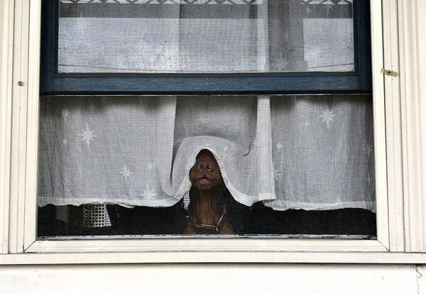 La foto del fotografo lana Rose - Sputnik Italia
