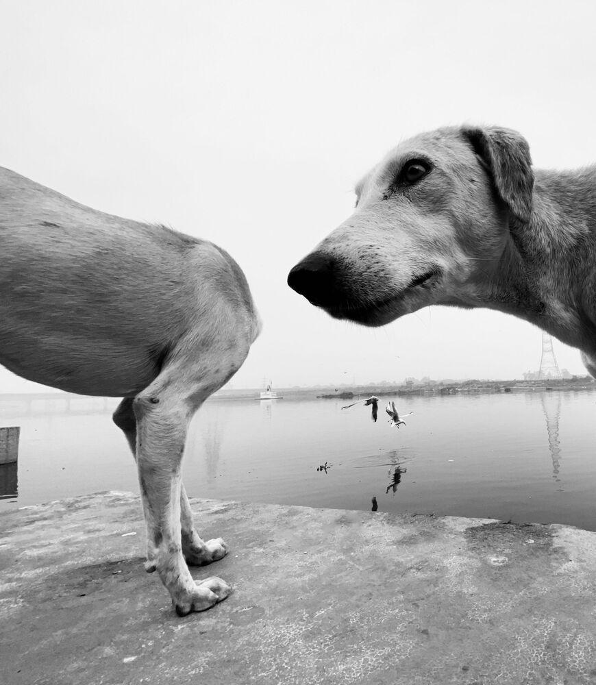 La foto del fotografo britannico Dimpy Bhalotia