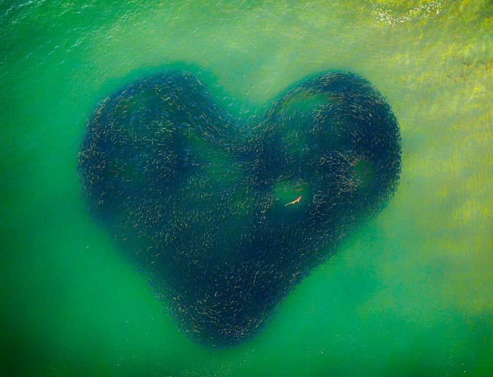 La foto Il cuore della Natura del fotografo Jim Picôt che è stata vincitrice del concorso Drone Photo Awards 2020