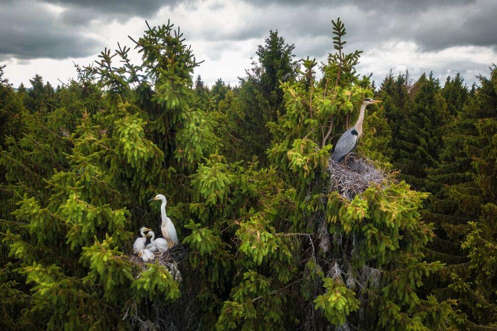 La foto Dove vivono gli aironi del fotografo Dmitrii Viliunov che è stata vincitrice nella categoria Fauna selvatica del concorso Drone Photo Awards 2020