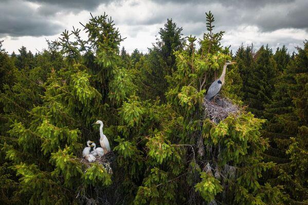 La foto Dove vivono gli aironi del fotografo Dmitrii Viliunov che è stata vincitrice nella categoria Fauna selvatica del concorso Drone Photo Awards 2020 - Sputnik Italia