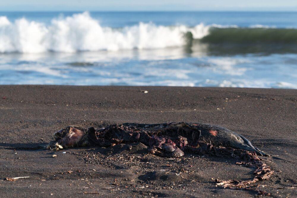 Disastro naturale in Kamchatka