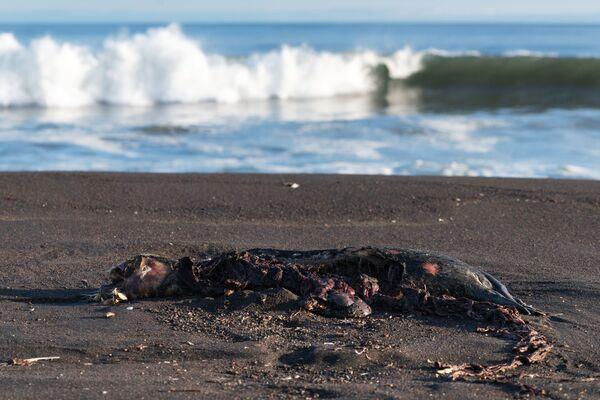Disastro naturale in Kamchatka - Sputnik Italia