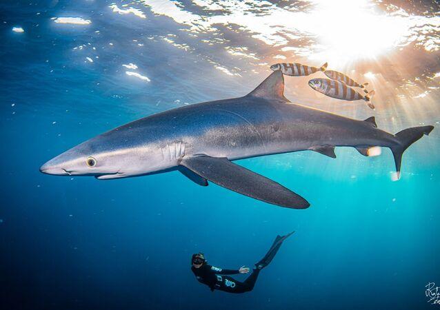 lo squalo in Spagna
