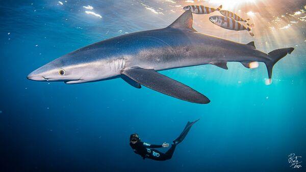 lo squalo in Spagna - Sputnik Italia
