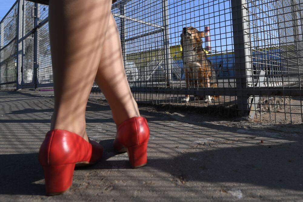 Una dipendente dell'Aeroflot vicino alla voliera con cani della razza shalaika dell'unità cinofila del dipartimento per la gestione della sicurezza aerea di Aeroflot all'aeroporto Sheremetyevo.