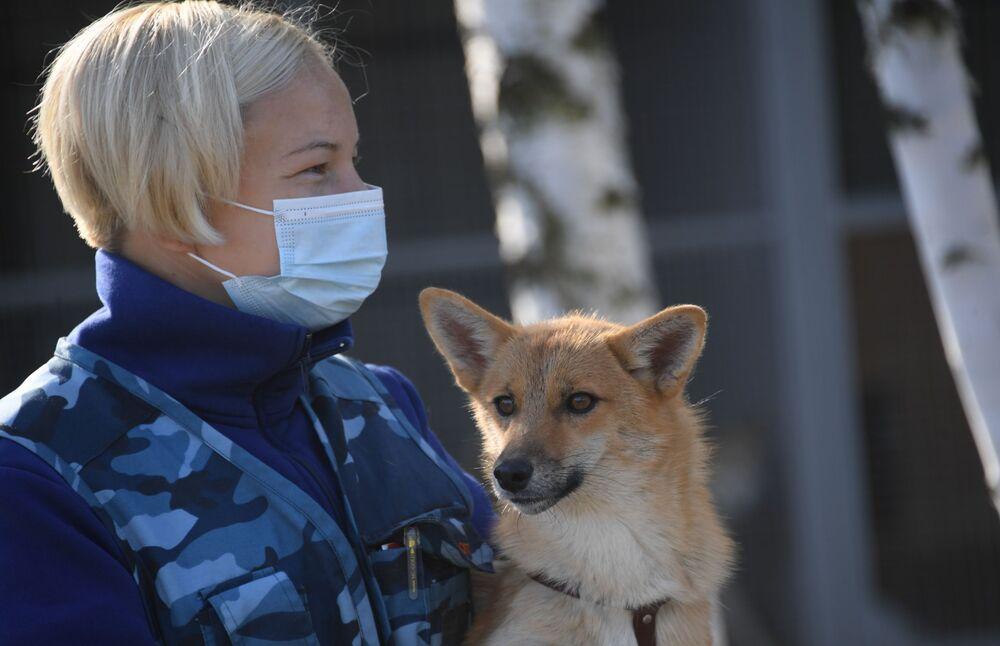 Cinologo con uno dei cani della razza shalaika dell'unità cinofila del dipartimento per la gestione della sicurezza aerea di Aeroflot all'aeroporto Sheremetyevo. La Shalaika è una razza ibrida originata da un incrocio iniziale tra pastore lappone e sciacallo dorato.