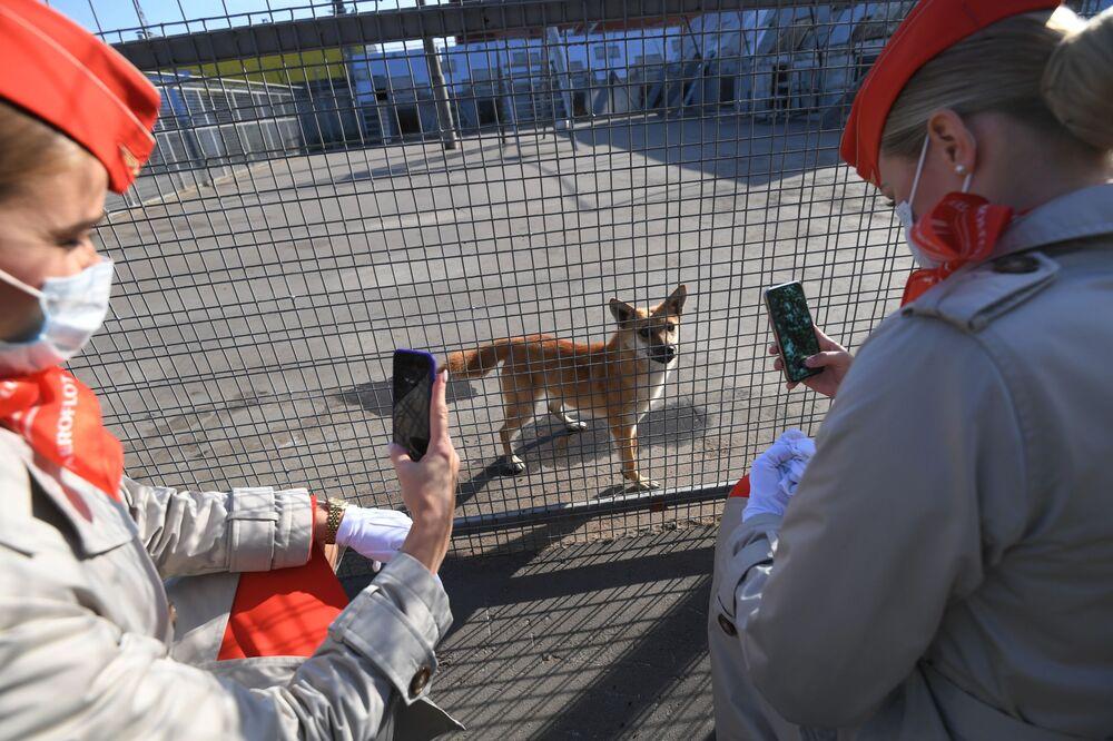 Le dipendenti dell'Aeroflot vicino alla voliera con cani della razza shalaika dell'unità cinofila del dipartimento per la gestione della sicurezza aerea di Aeroflot all'aeroporto Sheremetyevo.