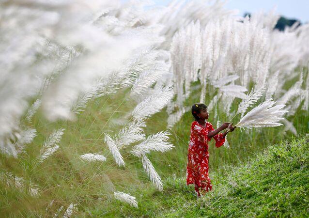 Una ragazza raccoglie i fiori alla periferia di Dhaka, Bangladesh, il 2 ottobre 2020