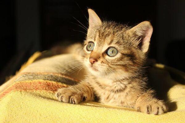Si stima che in Italia siano più di 60 milioni gli animali d'affezione, circa 8 milioni di gatti, membri a tutti gli effetti delle famiglie che contribuiscono attivamente alla gioia e al benessere dei proprietari - Sputnik Italia
