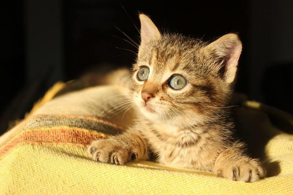 Si stima che in Italia siano più di 60 milioni gli animali d'affezione, circa 8 milioni di gatti, membri a tutti gli effetti delle famiglie che contribuiscono attivamente alla gioia e al benessere dei proprietari