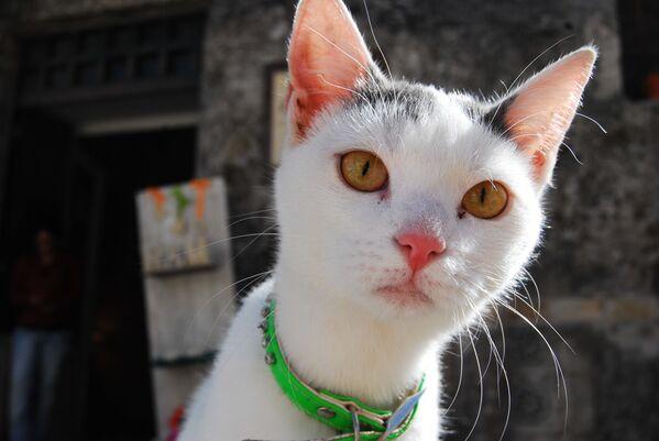 Fin dalle prime ore del mattino il web si è popolato di gatti, di ogni razza, colore e genere - Sputnik Italia