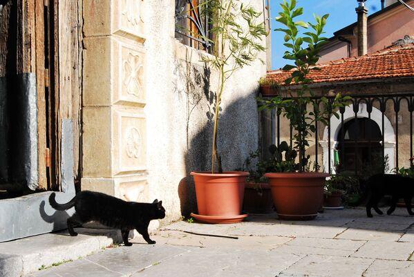 L'hashtag ufficiale è #WorldCatDay e accompagnerà sul web le foto dei gatti - Sputnik Italia