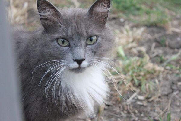 I gatti sono grandi compagni degli esseri umani - Sputnik Italia