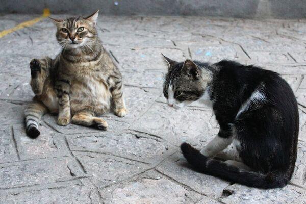 Non vi è dubbio che la Giornata internazionale del gatto sia un'occasione per ricordare ai nostri amici felini quanto siano importanti per noi, dimostrandogli amore ed affetto non solo in questa simpatica ricorrenza, ma 365 giorni l'anno.  - Sputnik Italia