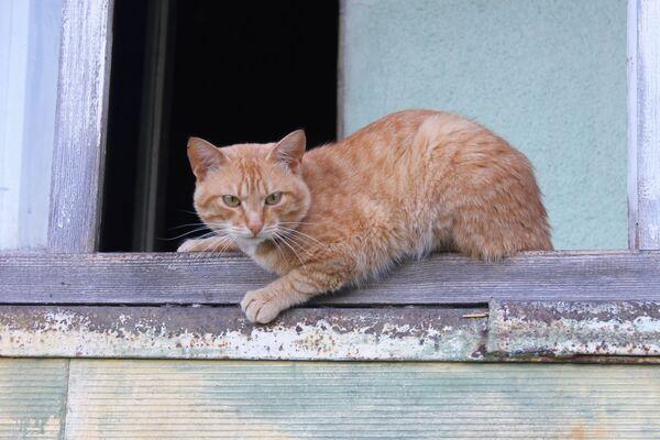 La Festa del gatto è dedicata a tutti i gatti del mondo - Sputnik Italia