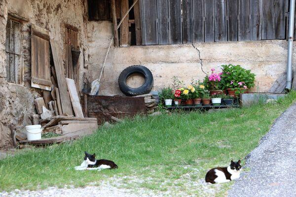 La Festa del gatto è nata in Italia nel 1990, per iniziativa della giornalista gattofila Claudia Angeletti e della sua lettrice Oriella Del Col   - Sputnik Italia