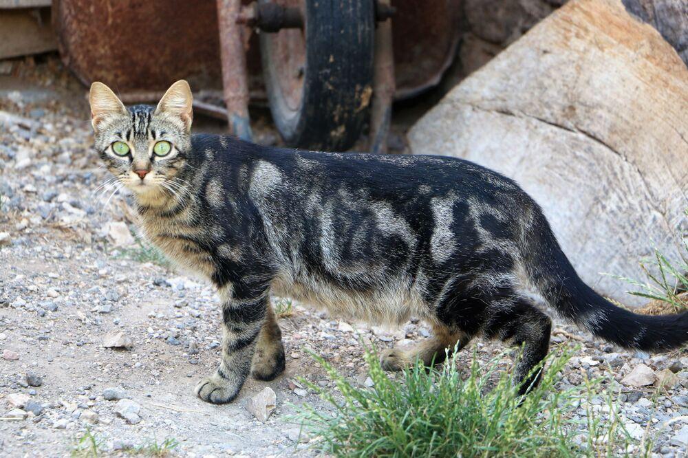 Un gatto bellissimo in Italia