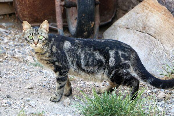 Un gatto bellissimo in Italia - Sputnik Italia