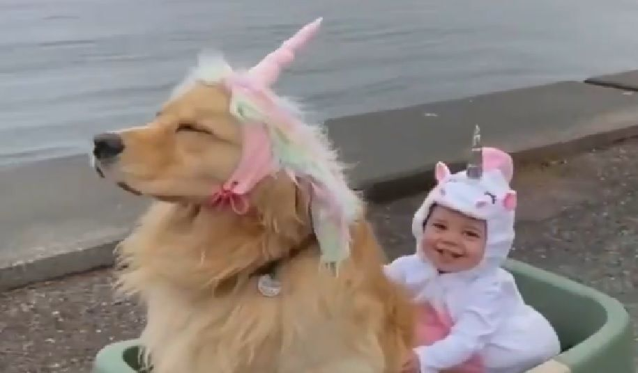Golden Retriever unicorno