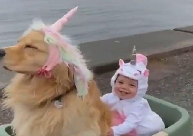 Golden Retriever unicorno