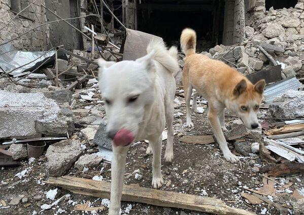 Cani sulle rovine delle case dopo i bombardamenti a Stepanakert - Sputnik Italia