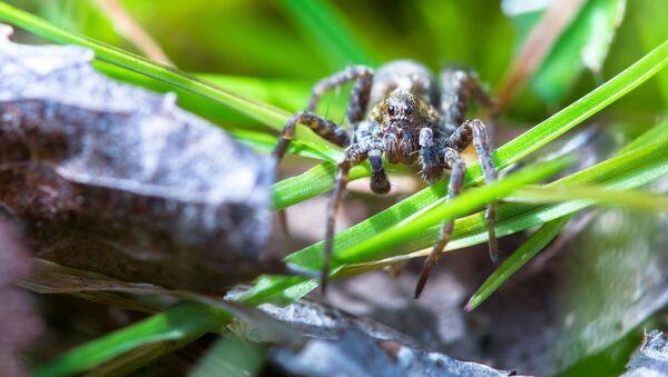 Паук в траве - Sputnik Italia