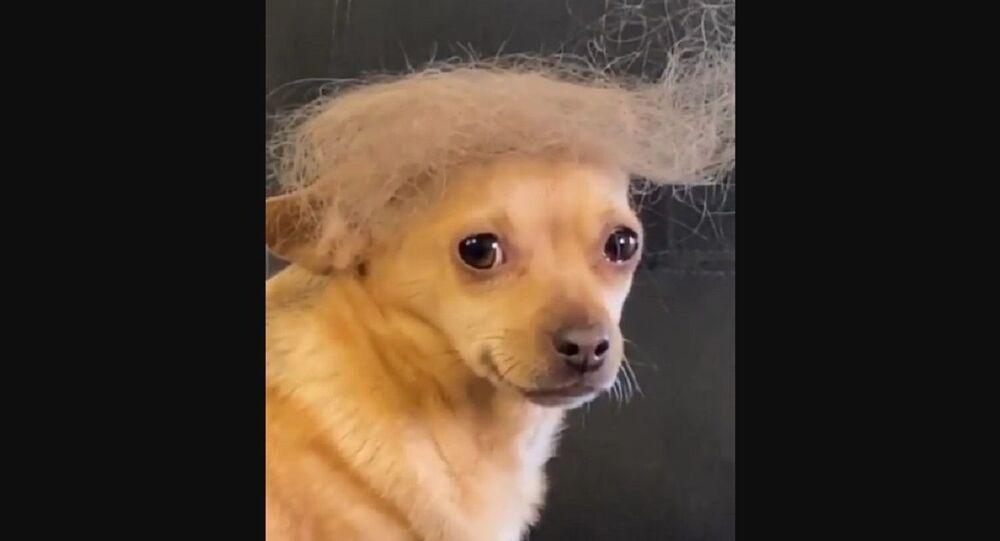 Trump, Biden peggior candidato di sempre