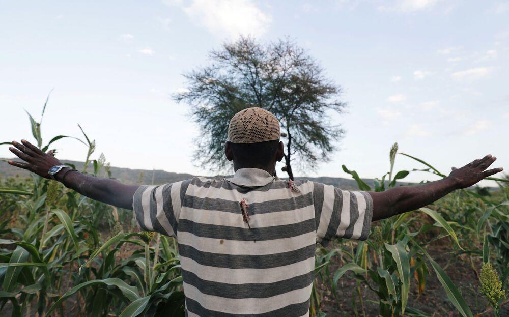 Un residente in campo durante l'invasione di locuste del deserto nel villaggio Jawaha vicino alla città di Kamise, nella regione di Amhara, in Etiopia.