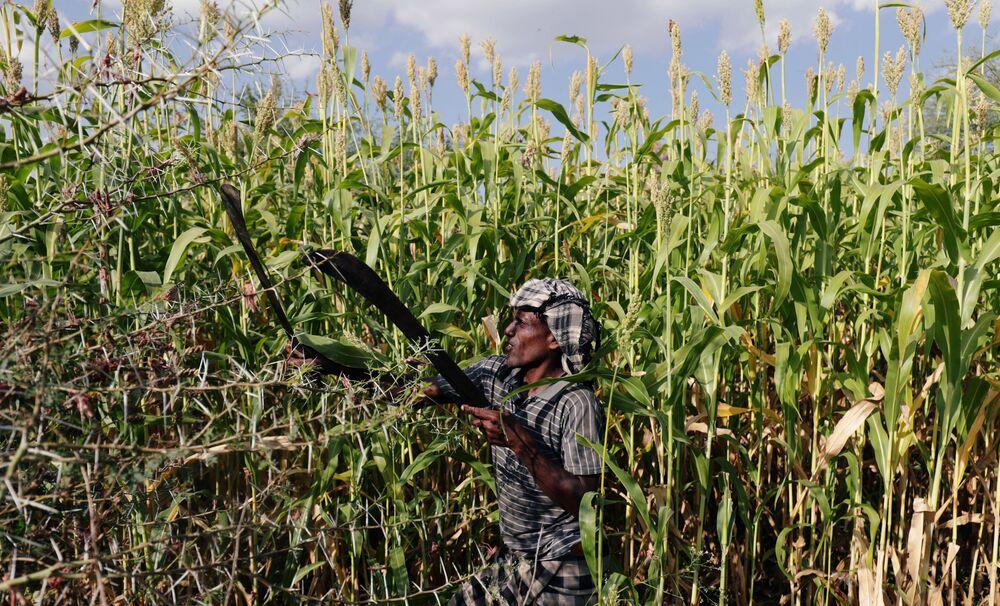 Un residente combatte contro l'invasione di locuste del deserto nel villaggio Jawaha vicino alla città di Kamise, nella regione di Amhara, in Etiopia.