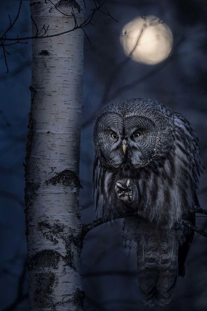 La foto Cacciatore della notte del fotografo svedese Jonas Classon, che è stata la vincitrice nella categoria Animali nel loro habitat del concorso Siena International Photo Awards 2020.