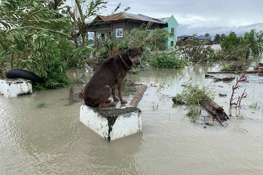Un cane in una strada inondata dopo la tempesta tropicale Molave che ha colpito la città di Pola, nella provincia orientale di Mindoro il 26 ottobre 2020, Filippine.