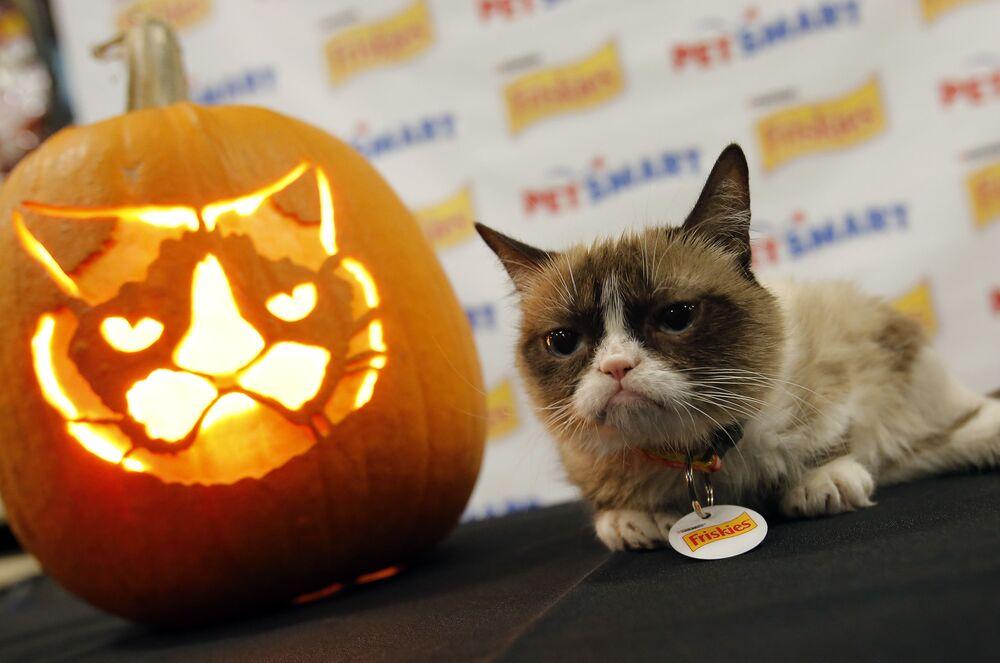 Grumpy Cat e una zucca con il suo ritratto.