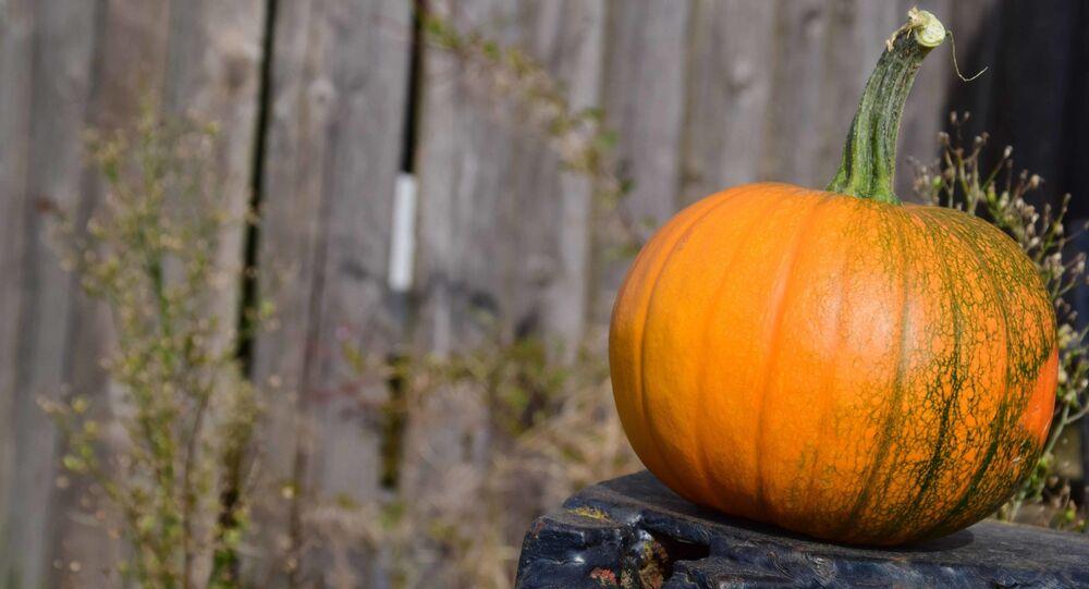 Zucca, Halloween, autunno