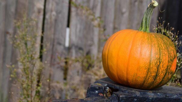 Zucca, Halloween, autunno - Sputnik Italia