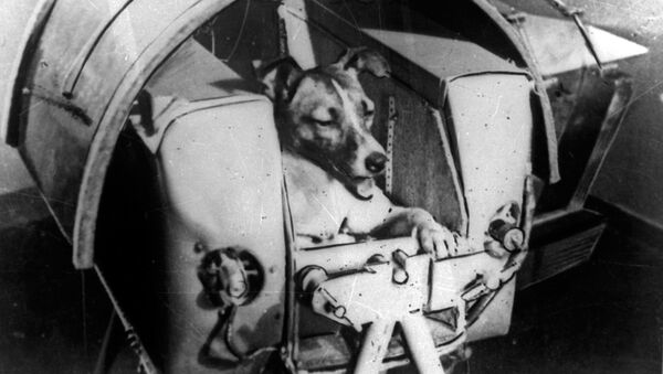Laika, la prima astronauta, era un cane, era femmina ed è morta tra atroci sofferenze.   - Sputnik Italia