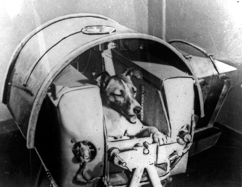 Laika, la prima astronauta, era un cane, era femmina ed è morta tra atroci sofferenze.
