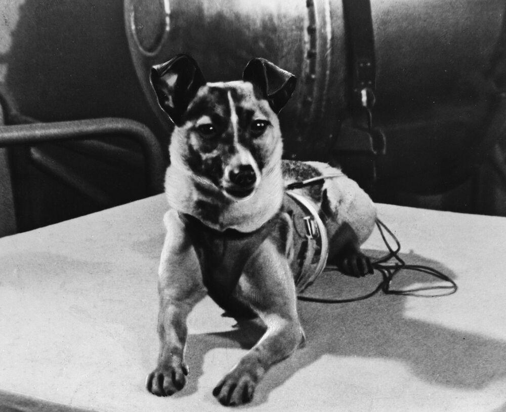 Sono passati 63 anni da quel 3 novembre del 1957 quando nello spazio fu lanciato il secondo satellite, lo Sputnik 2, ma ancora è vivo il ricordo di ciò che ha dovuto subire il cane Laika per una missione