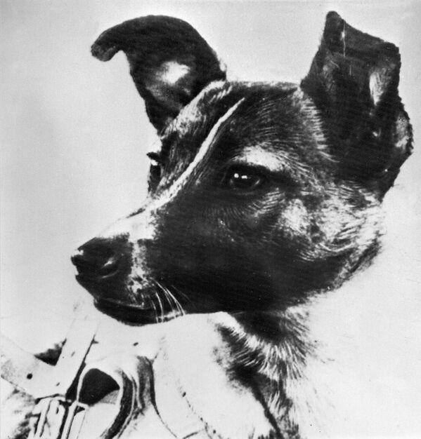 Ricordiamo che Laika è stata il primo essere vivente 'spedito' nello spazio per orbitare intorno alla Terra  - Sputnik Italia