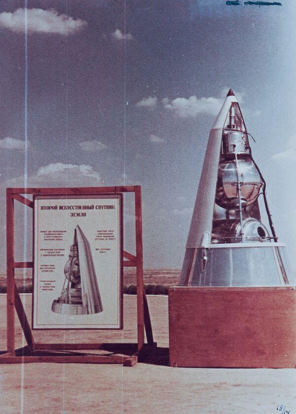Le cagnoline 'candidate' sono state anche obbligate a trascorrere molto tempo in una centrifuga che simulava gli effetti della spinta e il rumore del lancio  - Sputnik Italia