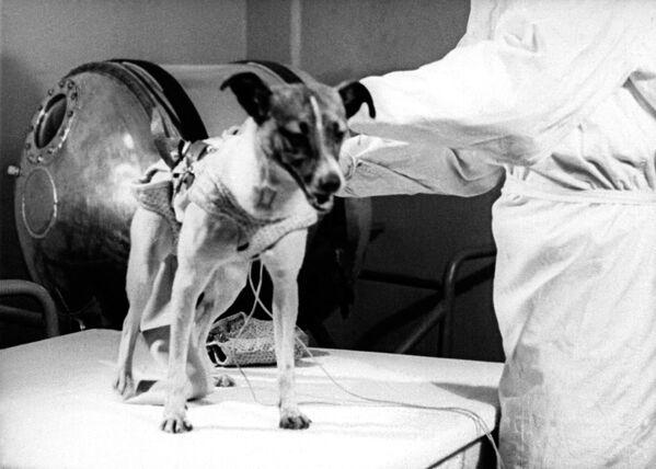 Ad un certo punto, durante la nona orbita della Terra, la temperatura all'interno della capsula ha iniziato a salire fino a raggiungere i 40 °C a causa dell'insufficiente isolamento ai raggi del Sole: le condizioni interne per Laika sono così diventate insopportaboli, la cagnolina è morta disidratata, a causa del caldo, nel giro di poche ore - Sputnik Italia