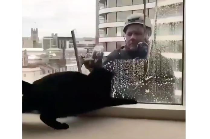 Lavavetri gioca con un gattino