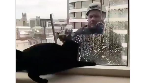 Lavavetri gioca con un gattino - Sputnik Italia